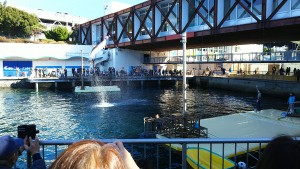 イルカの海ショー